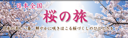 日本全国 桜の旅