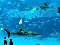 美ら海水族館 海洋博記念公園